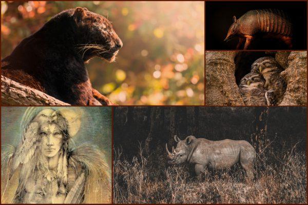 Power animals and Shamanic Allies