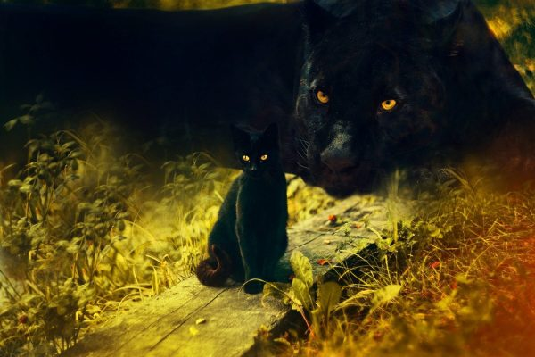 Banner Picture for Power Animal Class